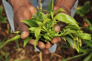 Agriculture in Africa can adapt to climate change, say industry experts