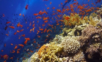 Marine life and World Heritage Sites threatened by rising sea levels and pollution