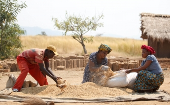 Invest in education and roads to increase food security, says FAO