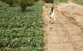 FAO launches new soil productivity programme for Africa